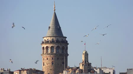 тревожный : Video of flocks of sea gulls, anxiously flying around Galata Towerr in Istanbul, Turkey