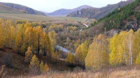ortam : Autumn landscape with Birch trees in Altai mountains, Siberia, Russia