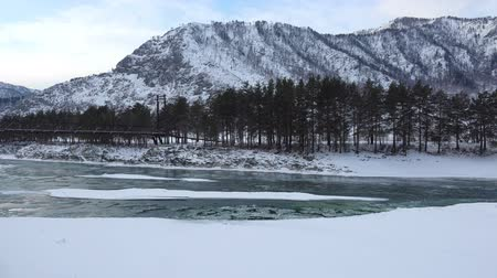 frazil ice : Floating of ice and sludge in water under bank with pine forest near Altai river Katun with mount on background in winter season, Siberia, Russia
