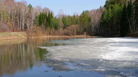 frazil ice : Pond on the river Zyryanka in novosibirsk botanical garden with ice in the Spring season