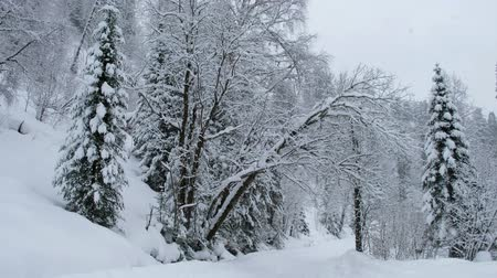 homály : Winter forest road under a heavy snow on the bank of the Teletskoe lake. Iogach, Siberia, Russia
