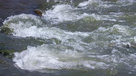 sputter : Rapids on river Vydriha near village Belovo in Novosibirsk region, Siberia, Russia Stock Footage