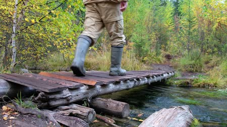 birch : Tourist man in boots and encephalitis suit crossing small wooden boardwalk bridge over forest creek in Altai mountains in rainy Autumn day Stock Footage