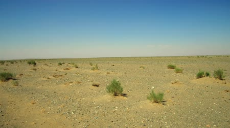 saxaul : Mongolian stone desert natural landscape with saxaul - Haloxylon ammodendron in south-west Mongolia Stock Footage