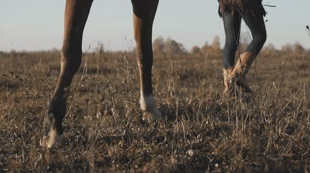 stabilizátor : Young girl taking on walk her dark horse by reins on sunrise. View of legs.