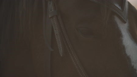 Extreme close-up of eyes of thoroughbred racehorse. Eyes of beautiful horse