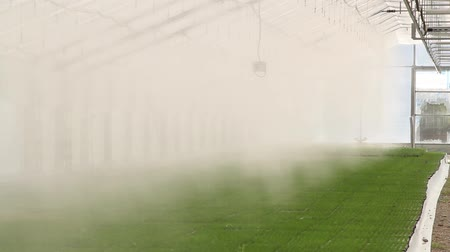 nevoeiro : Automatic Artificial Fog Microclimate In The Greenhouse Vídeos
