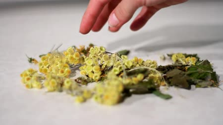 homeopatia : Dried healing plants mixed by hand