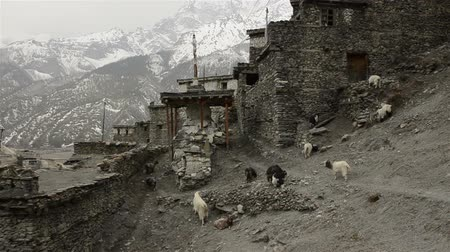 sherpa : mountain village in the Himalayas