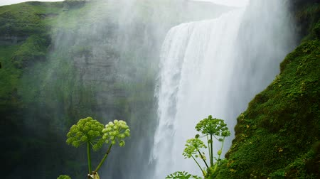 foss : Skogarfoss waterfall in the south of Iceland. Stock Footage