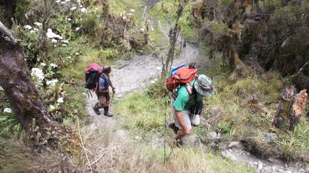 porters : Tourists and porters, the way to Kilimanjaro