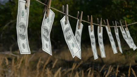 varal : Dollars drying on the rope. The financial concept dollar. Hundred dollar bill on a rope. The concept of money laundering.