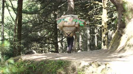 sherpa : The porter bears a heavy load. Track to the base camp of Everest in the Himalayas. Sagarmatha National Park, Nepal Stock Footage