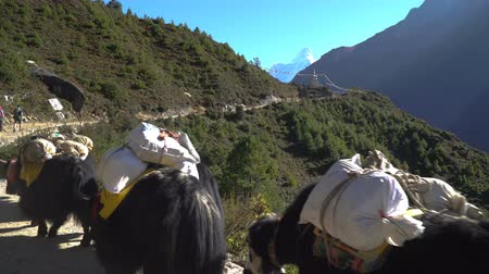 porters : Porters and yaks on the trail in the Himalayas. The path leads to the base camp of Everest. Nepal
