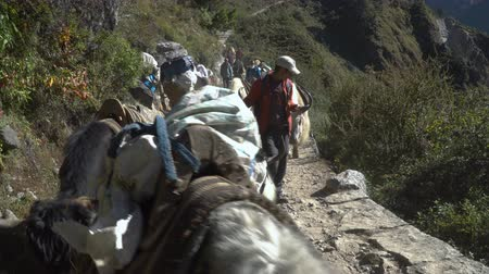 porters : NAMCHE, NEPAL - OKTOBER 22, 2017: Many tourists, porters and yaks are moving along the path leading to the base camp of Everest on oktober 22, 2017 in Namche, Nepal