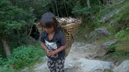 sherpa : The little girl works as a porter. Children must work to earn some money for the family, in Nepal