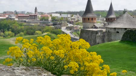wall building feature : Wild flowers and Medieval fortress in Kamenetc-Podilsky, Ukraine Stock Footage