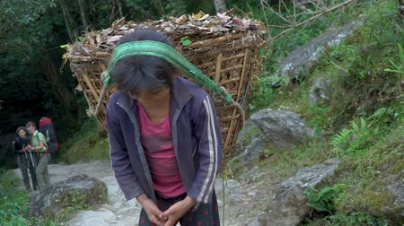 himalaia : The girl works as a porter. Children must work to earn some money for the family, in Nepal