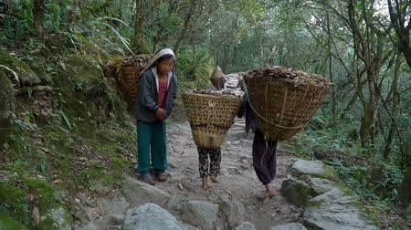 porters : Children work as porters in Nepal. They should carry loads in baskets to earn money for food. Stock Footage