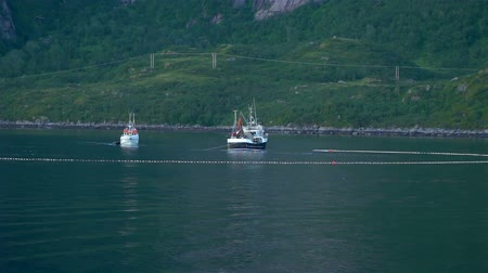 morina : Fishing ships arrange nets for catching cod in the Gulf of the Norwegian Sea