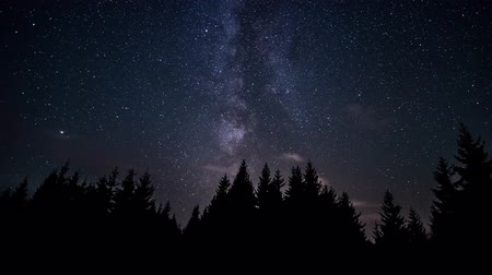starlit : The Milky Way is moving in the night sky over the silhouettes of trees. Timelapse. 4K