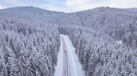 snow covered spruce : Aerial flight over winter forest with road. The car goes on the road. Snowy tree branch in a view of the winter forest. Aerial footage, 4K