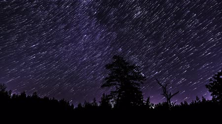 duch : Time lapse of Star trails in the night sky over the silhouettes of trees. 4K