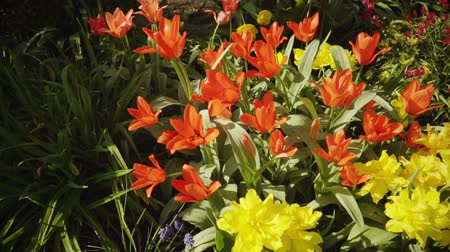 watering can : Spring flowers