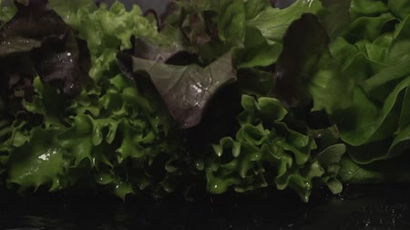 Lettuce leafs. Fresh verdure salad on wet dark surface. Slow motion.
