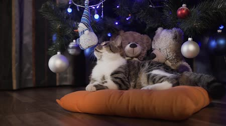 bochechudo : A little lovely cat is lying on an orange pillow under a Christmas tree decorated with decorative balls. Christmas holidays, evening
