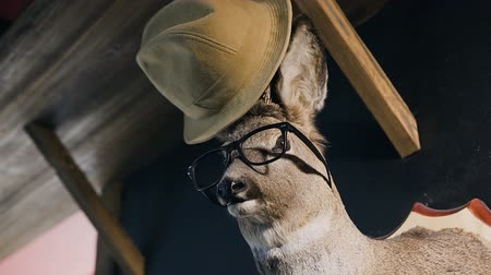 dead wood : Hunter trophy - deer in the glasses and hat on the head. The deer head hanging on the wall in the indoor. Stuffed animal with antlers. Stuffed deer head