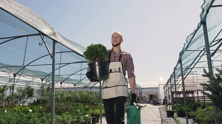 kavrama : A gardener in a clutch shirt and a garden tool goes greenhouse to plant ornamental plants. A sunny day in a large greenhouse.
