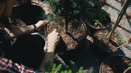 snoeien : Close up of hands. People plant seedlings in black soil using garden tools in garden center. Stockvideo
