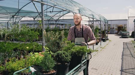 горшках : A man with a beard goes through a greenhouse, and carries on the Garden trolley seedlings of beautiful decorative trees. Стоковые видеозаписи