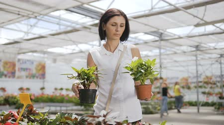 átalakítása : The brunette girl is dressed in a white shirt, holding a flower vase in his hands. Large greenhouse with flowers, natural sunlight. Stock mozgókép