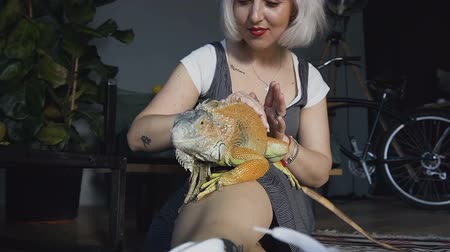 anfíbio : Cute europein woman holding and playing with chameleon. She is not scared to hold it on hand. Concept of self learning and love animal lifestyle.
