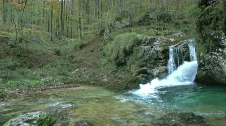 cserjés : The water of a stream that flows into the wood