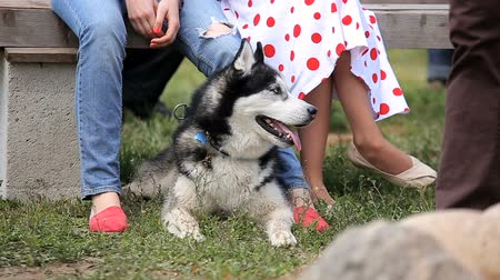 Husky with the owners at the backyard pet party Wideo