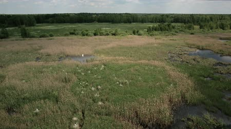 brodění : Aerial view of bog lands with white herons nesting place