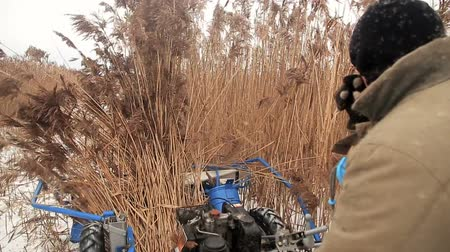 раздельный : Harvesting reed in winter Стоковые видеозаписи