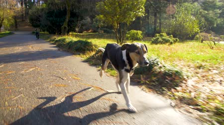 társ : Happy dog running along the garden road