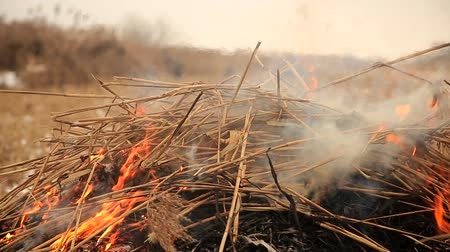 hay harvest : Stack of dry grass on fire