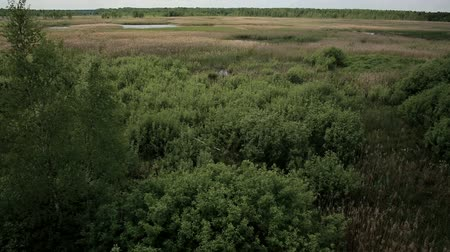 mês : Aerial view of bog lands with white herons nesting place