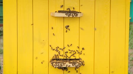 beporzás : Honey bees at a beehive