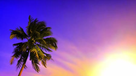 jamaica : Palm tree at sunset. Tropical beach landscape with vivid sky, hot sun light. 4K video footage
