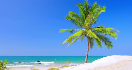 destinace : Beautiful palm tree on sea shore at sunny summer day. Vacation background of perfect seascape with sandy beach, blue sky and clear water
