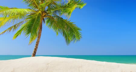 paraíso : Exotic travel destination background. Sandy beach, palm tree and clear blue sky on sea shore at sunny summer day. Tropical paradise Vídeos