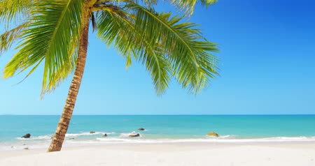 destinace : Idyllic tropical island beach. Green palmtree on sandy beach at sunny day with blue sky