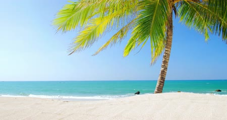 scény : Green leaves of palmtree, white sand beach and clear blue sky on exotic tropical island. Scenic and peaceful background of perfect sea shore for summer vacation
