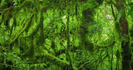 deep forest : Wet and mossy tree  branches in jungle forest Stock Footage